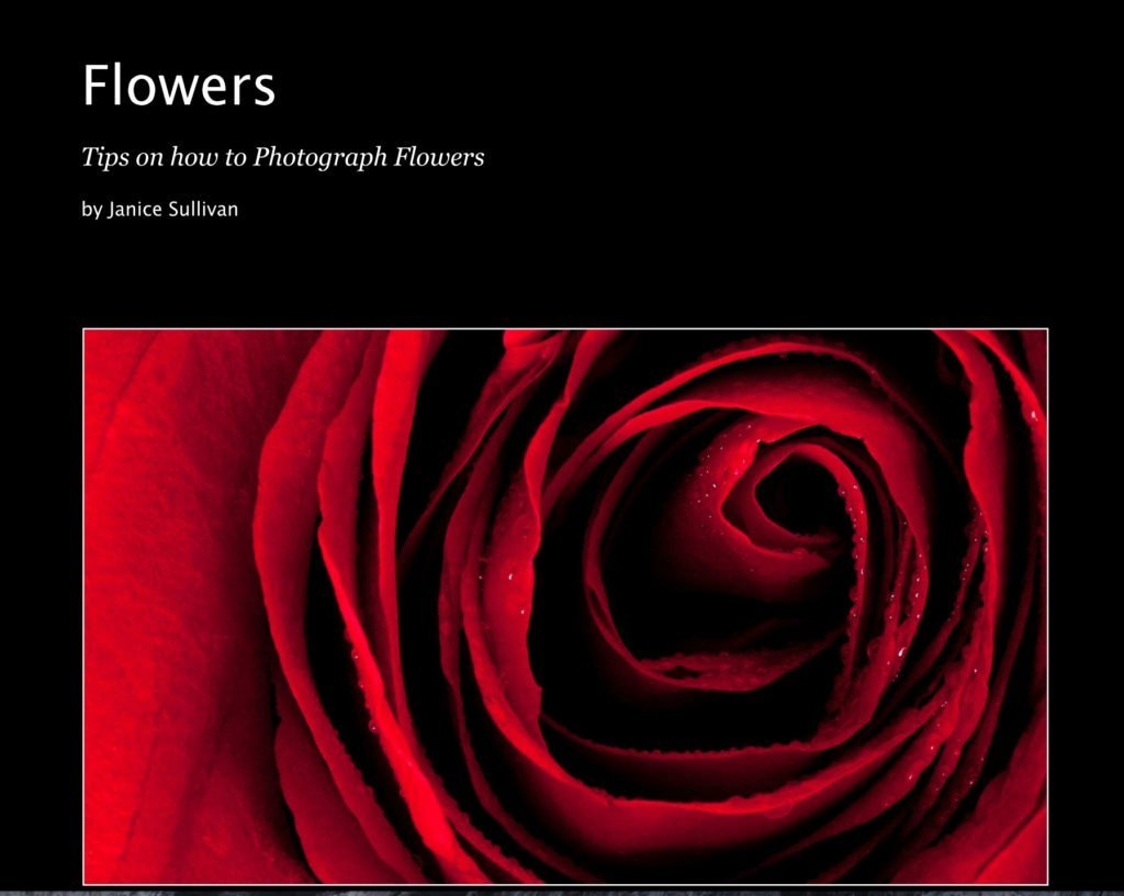 photograph flowers
