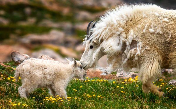 kim nordby wildlife