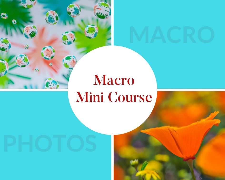 macro photography minicourse