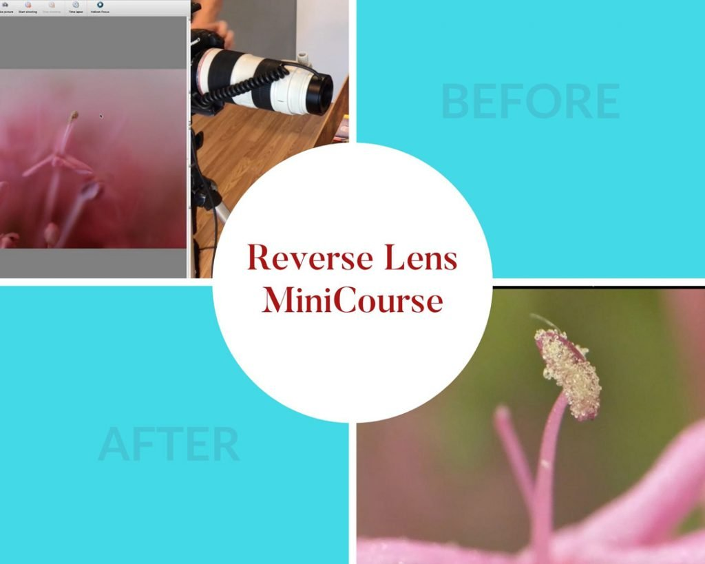 how to photograph by reversing your lens